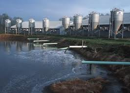 runoff from giant hog factory